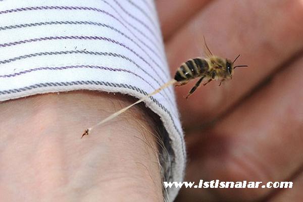 Arı Sokmasında İlk Yardım Önerisi